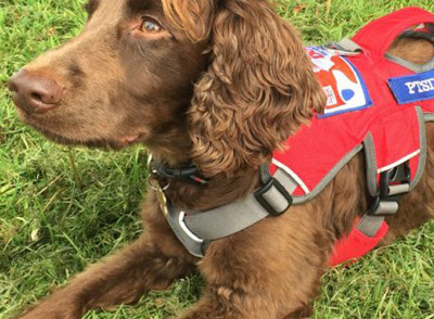 Service Dogs UK make a difference