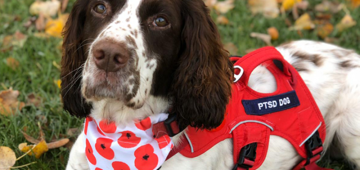Service Dogs UK Training Dogs